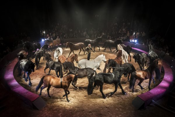 carrousel equestre