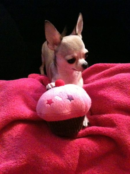 karlotta cupcake